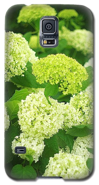 Galaxy S5 Case featuring the photograph White And Green Hydrangea Flowers by Suzanne Powers