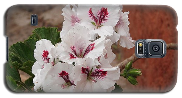 Galaxy S5 Case featuring the photograph White And Red Geraniums by Lew Davis