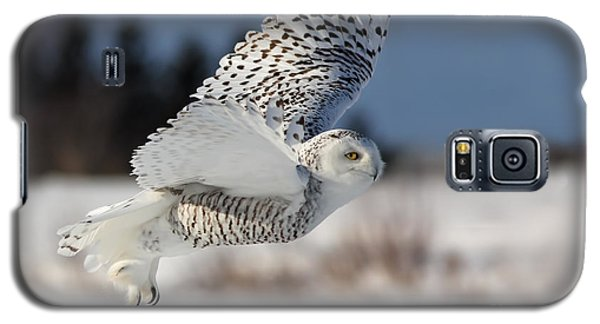White Angel - Snowy Owl In Flight Galaxy S5 Case by Mircea Costina Photography