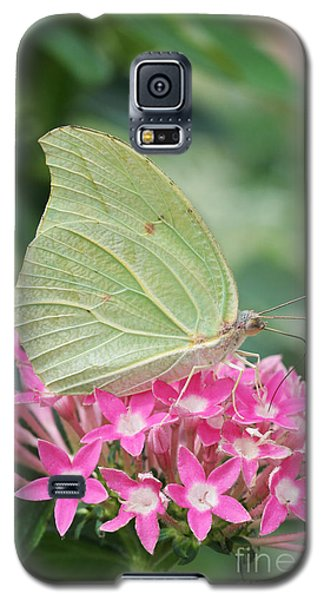 Galaxy S5 Case featuring the photograph White Angled Sulphur by Judy Whitton