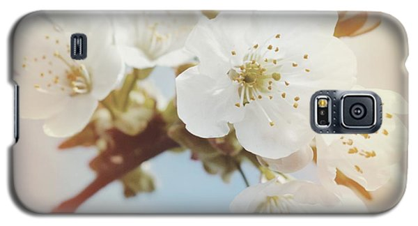 White Apple Blossom In Spring Galaxy S5 Case by Matthias Hauser