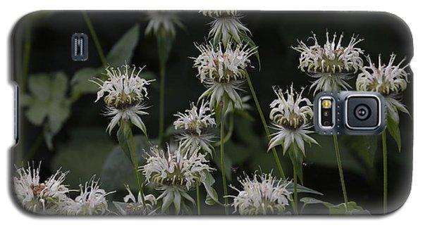 White Bergamot Galaxy S5 Case