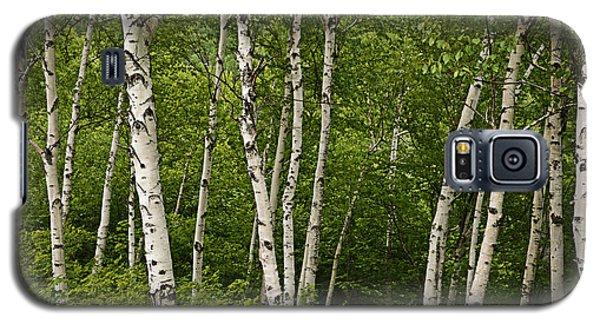 White Birch Galaxy S5 Case by Alana Ranney