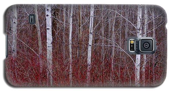 White Birch In The Adirondacks Galaxy S5 Case by Karen Molenaar Terrell