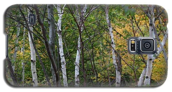 Galaxy S5 Case featuring the photograph White Birches In The Woods by Denyse Duhaime