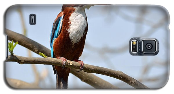 White Breasted Kingfisher Galaxy S5 Case
