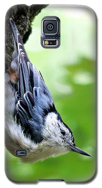 White Breasted Nuthatch Galaxy S5 Case by Christina Rollo