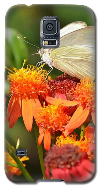 Galaxy S5 Case featuring the photograph White Butterfly On Mexican Flame by Debra Martz