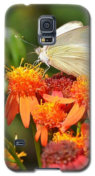 White Butterfly On Mexican Flame Galaxy S5 Case