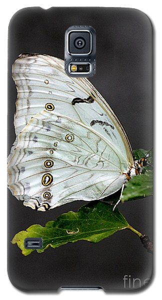 White Butterfly Galaxy S5 Case