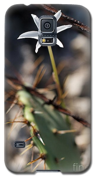 Galaxy S5 Case featuring the photograph White Cactus Flower by Erika Weber