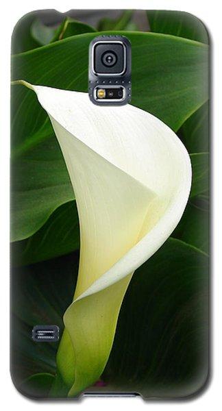 Galaxy S5 Case featuring the photograph White Calla by Lew Davis