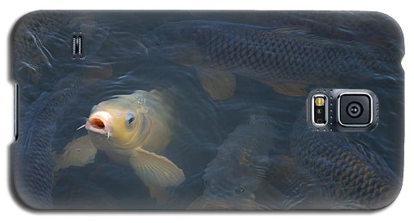 White Carp In The Lake Galaxy S5 Case