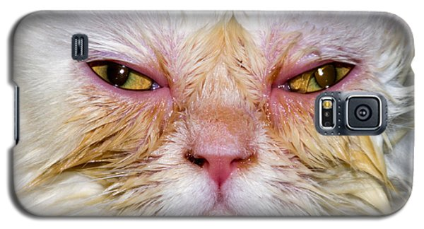 Scary White Cat Galaxy S5 Case