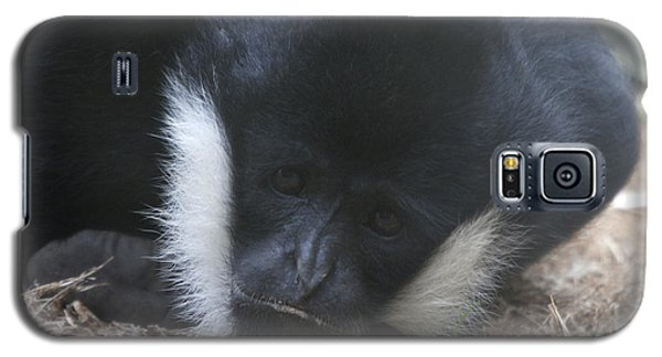 White-cheeked Gibbon - 0004 Galaxy S5 Case by S and S Photo