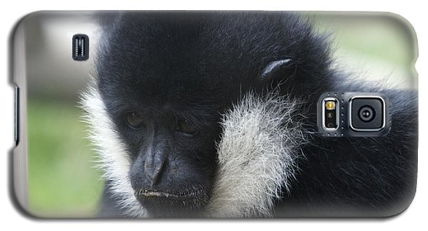 White-cheeked Gibbon - 0005 Galaxy S5 Case by S and S Photo