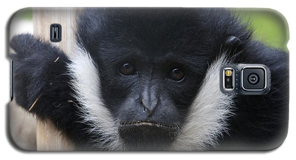 White-cheeked Gibbon - 0006 Galaxy S5 Case by S and S Photo