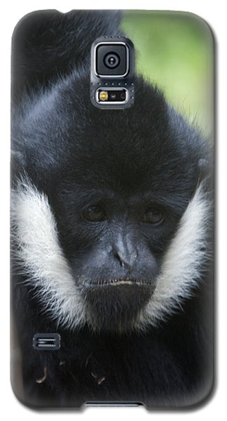 White-cheeked Gibbon - 0008 Galaxy S5 Case by S and S Photo