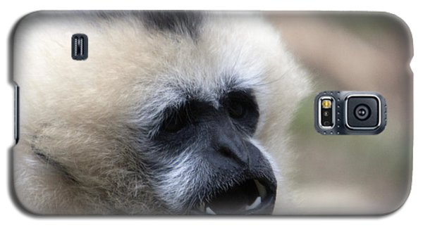 White-cheeked Gibbon - 0009 Galaxy S5 Case by S and S Photo
