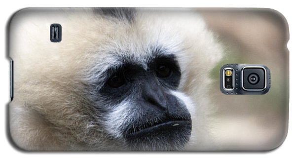White-cheeked Gibbon - 0010 Galaxy S5 Case by S and S Photo