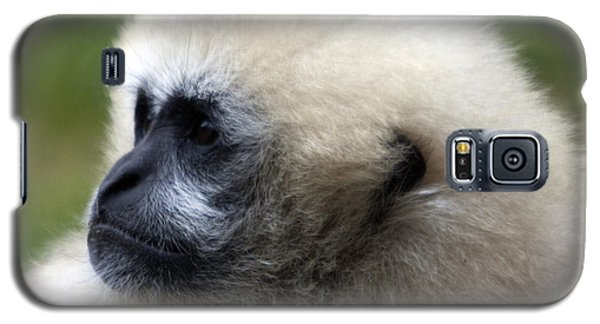 White-cheeked Gibbon - 0011 Galaxy S5 Case by S and S Photo