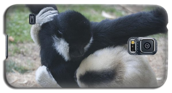White-cheeked Gibbon - 0012 Galaxy S5 Case by S and S Photo