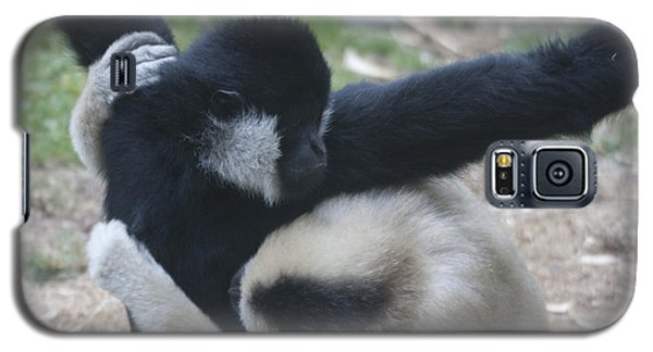 White-cheeked Gibbon - 0013 Galaxy S5 Case by S and S Photo