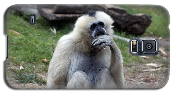 White-cheeked Gibbon - 0015 Galaxy S5 Case by S and S Photo
