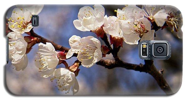 White Cherry Blossoms Galaxy S5 Case