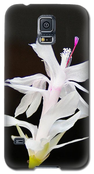Galaxy S5 Case featuring the photograph White Christmas Cactus by B Wayne Mullins