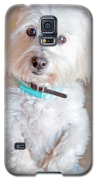 White Coton De Tulear Dog Standing Up Galaxy S5 Case by Valerie Garner