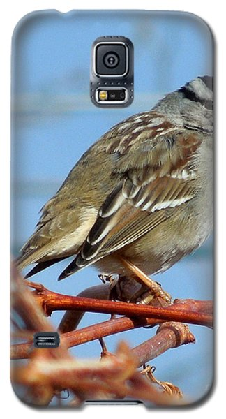 Galaxy S5 Case featuring the photograph White Crowned Sparrow by Heidi Manly