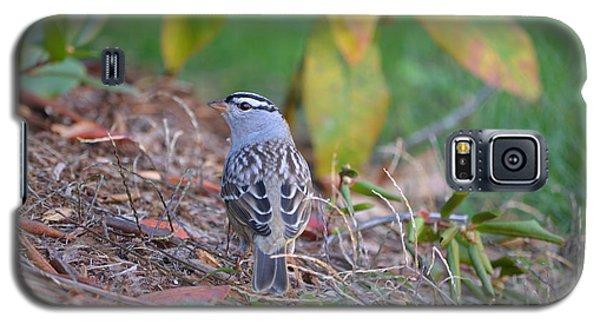 White-crowned Sparrow Galaxy S5 Case by James Petersen