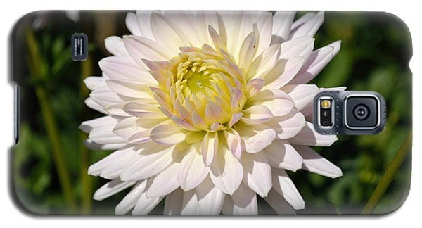 White Dahlia Flower Galaxy S5 Case