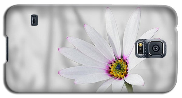 White Daisy Bush Galaxy S5 Case