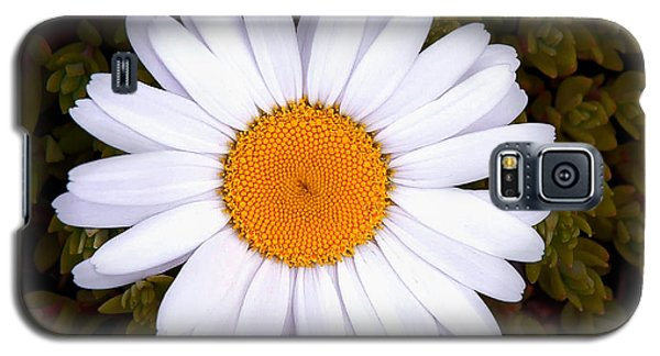 Galaxy S5 Case featuring the photograph White Daisy In Bloom by Gary Slawsky