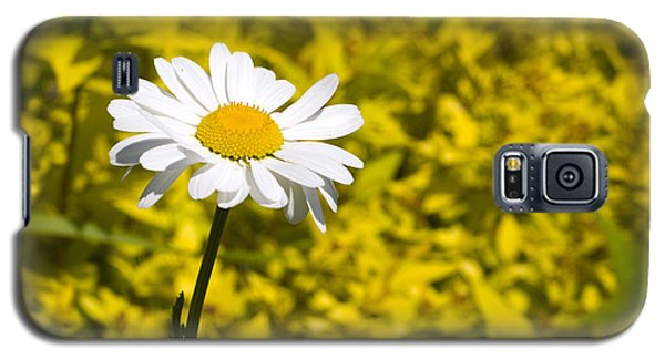 White Daisy In Yellow Garden Galaxy S5 Case