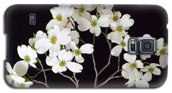 Galaxy S5 Case featuring the photograph White Dogwood Branch by Jeannie Rhode