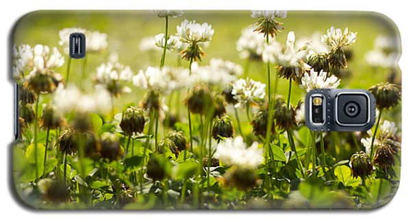 White Dutch Clover Wild Plants In The Sunshine Galaxy S5 Case