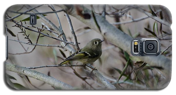 White-eyed Vireo Galaxy S5 Case by Donna Brown
