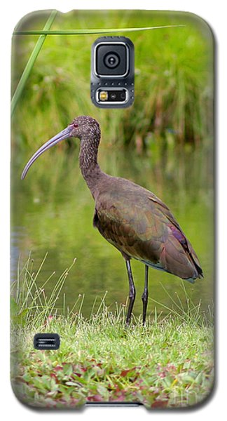Galaxy S5 Case featuring the photograph White-faced Ibis 2 by Bob and Jan Shriner