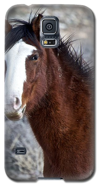 White-faced Mustang In December V Galaxy S5 Case by Vinnie Oakes