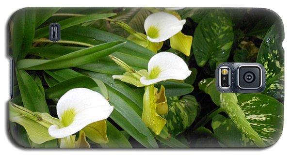 White Flower Array Galaxy S5 Case