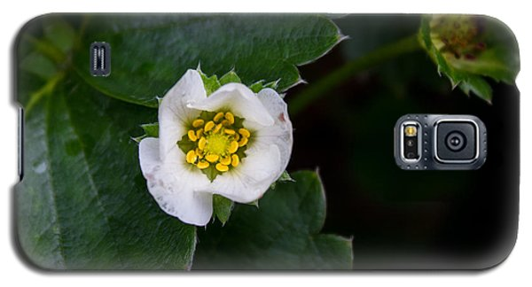 Galaxy S5 Case featuring the photograph White Flower by Glenn DiPaola
