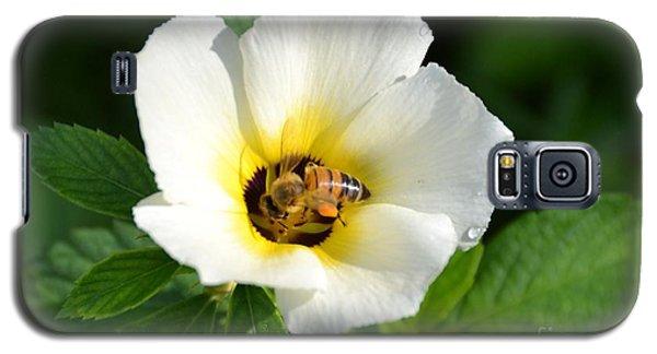 White Flower- Nectar Galaxy S5 Case