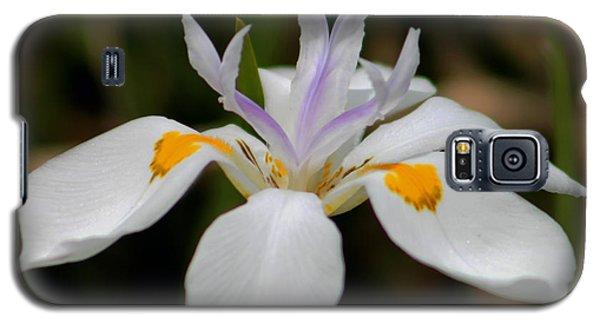 White Flower Galaxy S5 Case by Pamela Walton