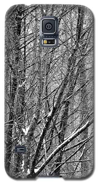 Galaxy S5 Case featuring the photograph White Forest by Marc Philippe Joly