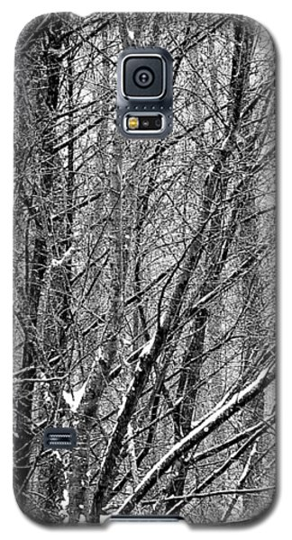 White Forest Galaxy S5 Case