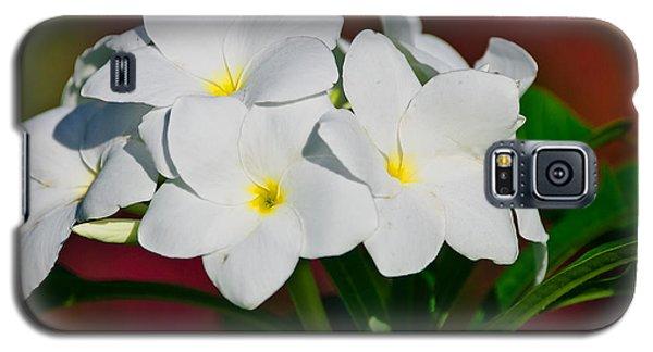 White Frangipani Galaxy S5 Case