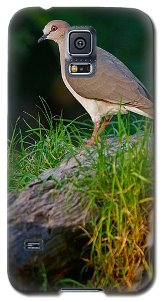 White-fronted Dove Galaxy S5 Case